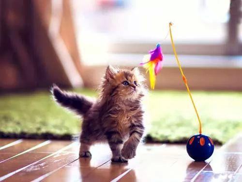 Pair Of Cute Toys Hd Wallpaper: نصائح مهمة في اسلوب اللعب مع القطط