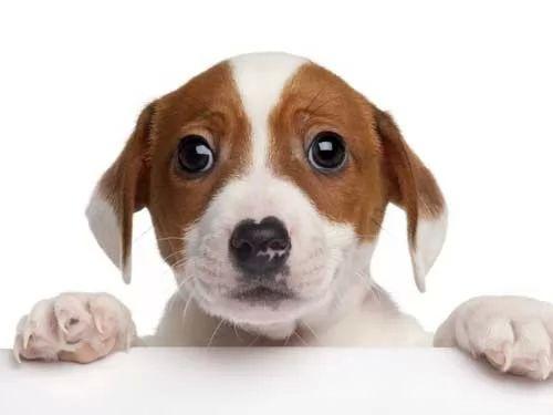 كيف اختار سلالة الكلاب الخاصة المناسبة ؟