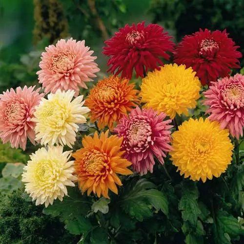 افضل انواع النباتات الطاردة للحشرات