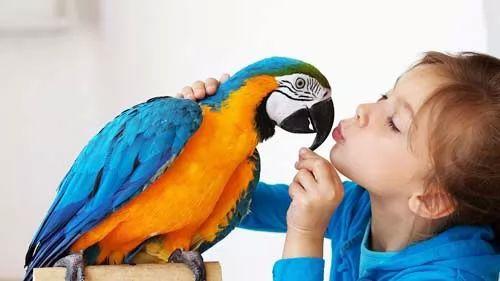 صور - كيف تختار طيور الزينة الخاصة بك ؟