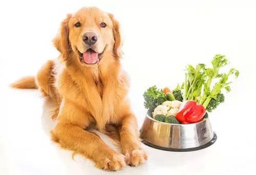 افضل انواع اكل الكلاب الصحي