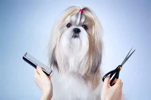 صور - كيف يمكن قص شعر الكلاب الاليفة في المنزل ؟