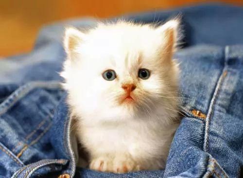 صور - كيف تتعرف على حب القطط لك ؟