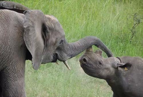 صور - اهم الحيوانات المهددة بالانقراض فى الهند