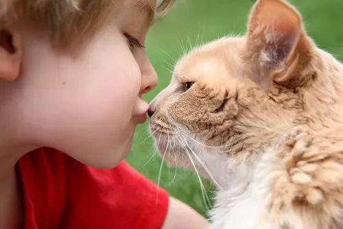نتيجة بحث الصور عن ما هي أضرار تربية القطط في المنزل على الأطفال والبنات؟