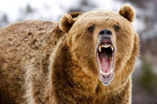 صور - ماهي اخطر 10 حيوانات مفترسة في العالم ؟