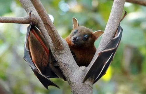 صور - اشهر الخرافات الخاصة بالحيوانات