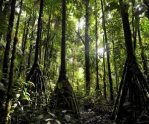 غرائب - اشجار الاكوادور تسير عشرون متر !!