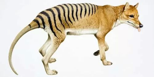 اشهر عشر اسماء حيوانات منقرضة في العالم بالصور منتديات درر العراق