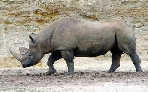 اشهر عشر اسماء حيوانات منقرضة في العالم بالصور