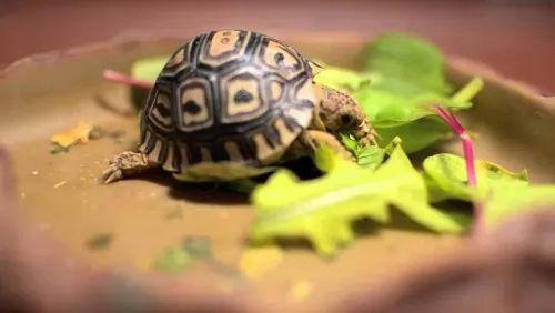 صور - ما هو اصغر حيوان في العالم ؟