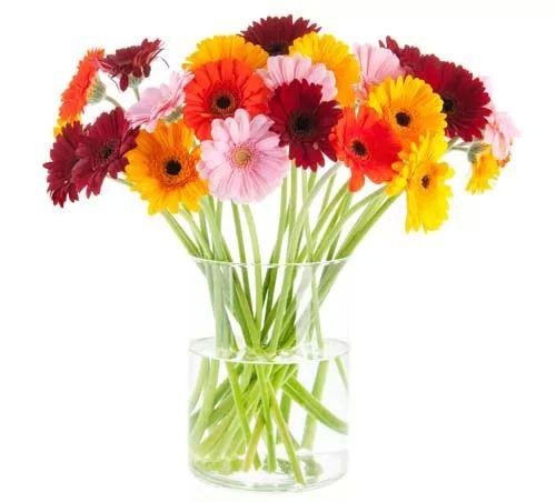 صور - قص الزهور ، وكيفية العناية بها