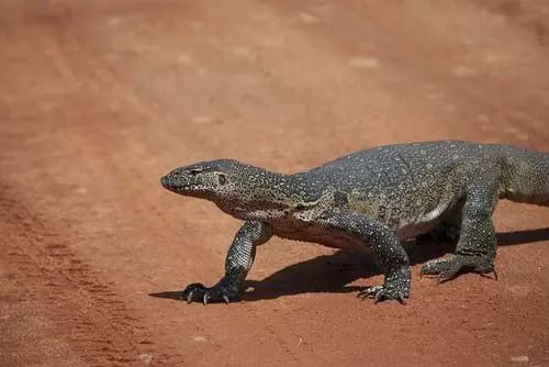 ما هي اشهر حيوانات الصحراء التي تكيفت مع الظروف القاسية ؟
