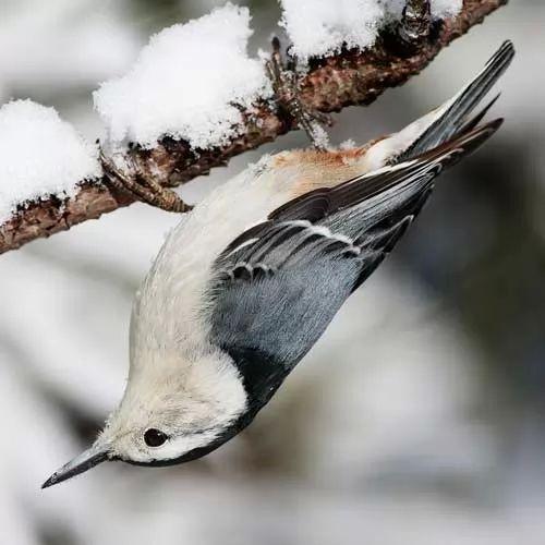 ما هي اغرب الطيور في
