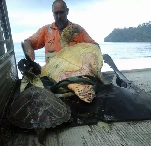 غرائب وعجائب العالم - رجل يشترى السلاحف البحرية من السوق ويعيدها الى المحيط