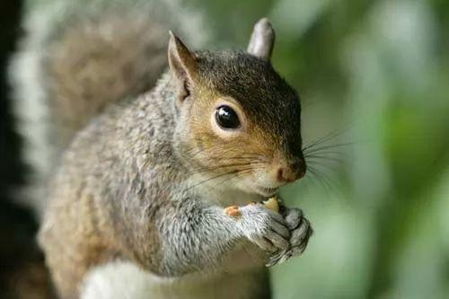 صور - اغرب عادات الحيوانات في الحصول على الغذاء
