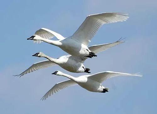 حقائق هامة هجرة الطيور
