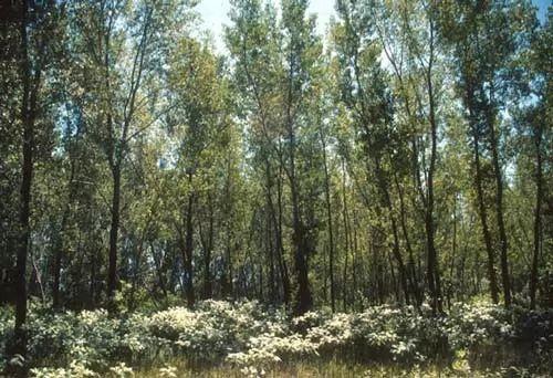 10 من اسرع الاشجار والنباتات نموا في العالم بالصور