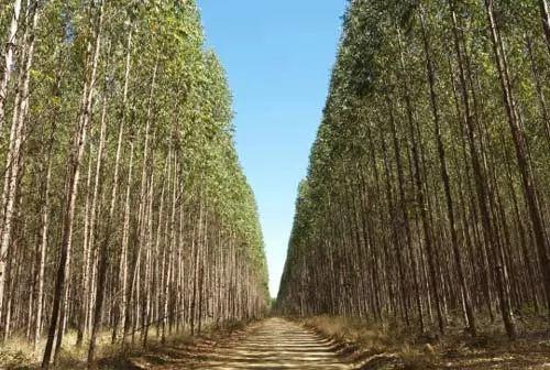 10 من اسرع الاشجار والنباتات نموا في العالم coobra.net