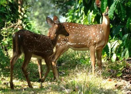 بالصور 10 من اغرب الحيوانات في العالم coobra.net