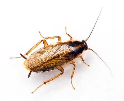 صور - اغرب انواع الحشرات النادرة بالصور