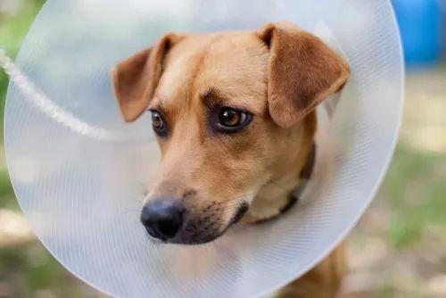 ما انواع حساسية الكلاب الاكثر شيوعا و طرق علاجها ؟