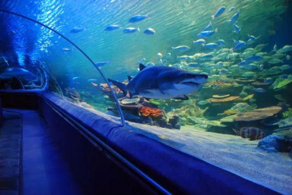 صور - هل اكبر حوض سمك في العالم هو اكواريوم دبي؟