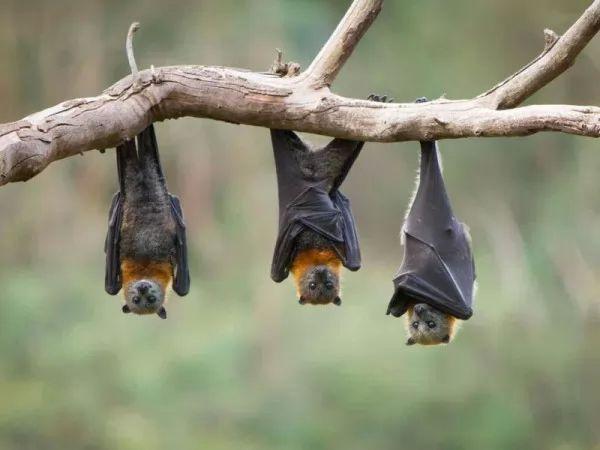 10 معلومات عن الخفاش لم تكن تعرفها