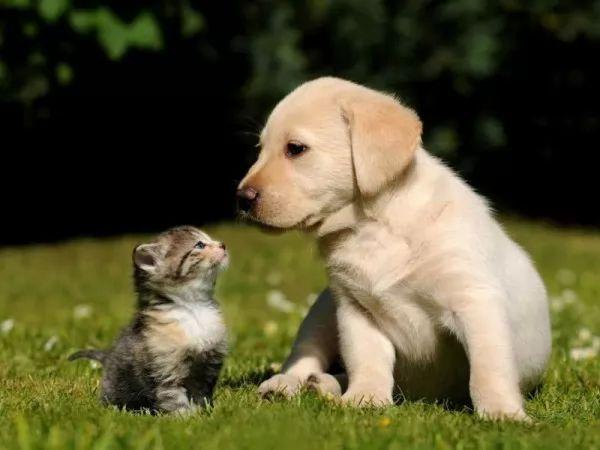 صور - القطط والكلاب ايهم اذكى حيوان ؟