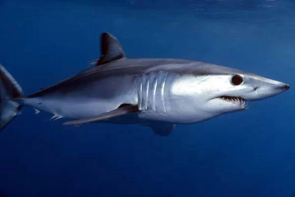 صور - 10 من اخطر سمك القرش في العالم بالصور