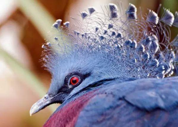 صور - 10 من اكبر الحيوانات الغير المعروفة في العالم بالصور