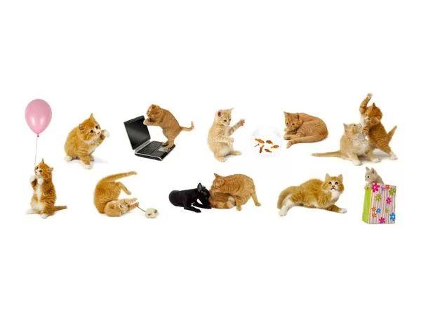 صور - كيفية فهم سلوك ولغة القطط