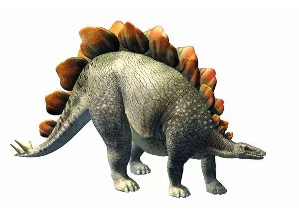 صور - معلومات عن الديناصور ستيجوسورس