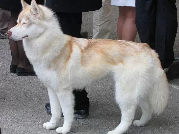 صور - 10 من اخطر انواع الكلاب فى العالم بالصور