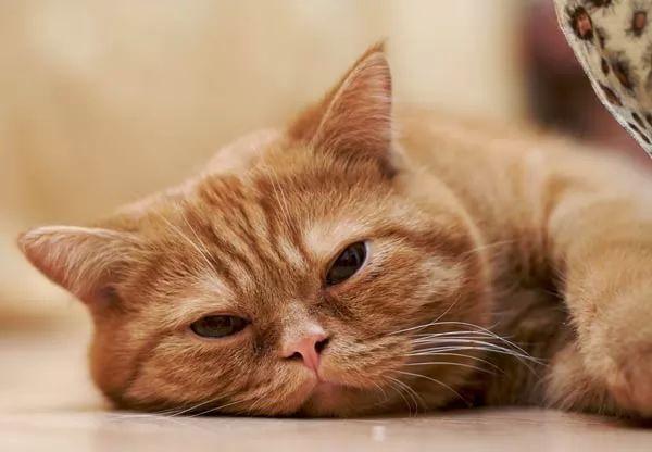 صور - ماذا تفعل في حالة خروج دم مع براز القطط الاليفة ؟