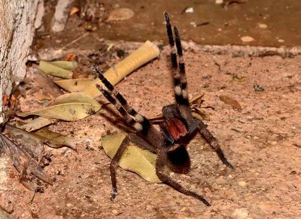 صور - اخطر العناكب السامة القاتلة في العالم
