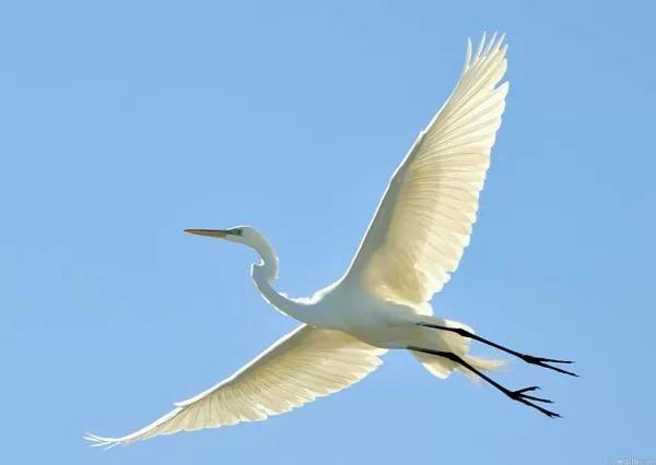 كيف تستطيع الطيور ان تطير عاليا 8940_1_or_1482574149