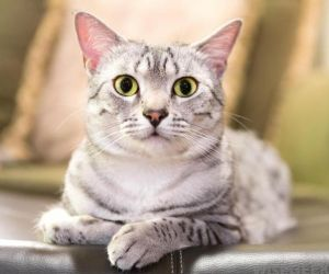 هناك العديد من العوامل التي تساعد في تكوين الامساك عند القطط، بما في ذلك النظام الغذائي، الجفاف، الاورام، او صندوق النفايات، والقطط من المعروف عنها ...