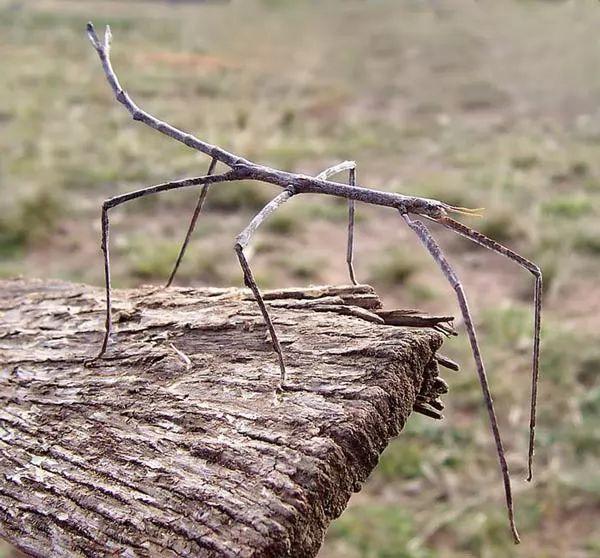 صور - 10 من اغرب الحشرات النادرة حول العالم بالصور