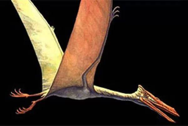 صور - التيروصورات احد انواع الديناصورات الطائرة