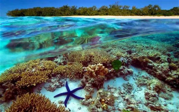 معلومات عن الحاجز المرجاني العظيم أستراليا 9023_1_or_1484439202