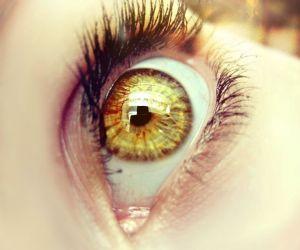 المملكة الحيوانية مليئة بالمخلوقات التي تتميز بالعيون الملونة ، فنجد علي سبيل المثال البومة الكبيرة تتميز بالعيون الذهبية المذهلة، في حين القطط ترى ...