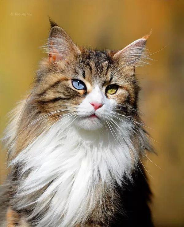 صور - ما هى اسباب تغير لون عيون القطط ؟