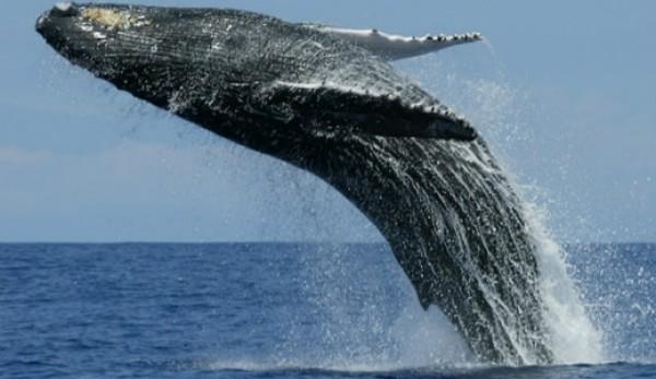 اكبر حيوانات كوكب الارض