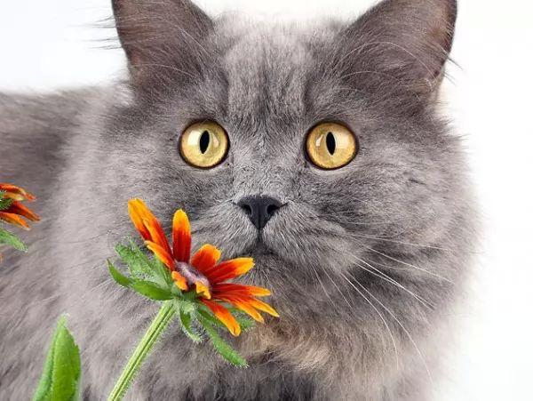 اسباب حساسية القطط يمكن تجنبها؟