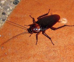 هذه الحشرات تعتبر صغيرة في الحجم ولكنها رهيبة، ففي الواقع فانها حشرات مخيفة و يمكن لراحة يدك أن تحتويها، كما أنها يمكن أن تؤدي الى أكبر المخاوف، ولكن ...