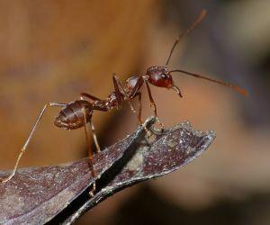 هل نظرت في أي وقت الى موكب من النمل تحت عدسة مكبرة، أو حاولت أن تمسك فراشة خلال فصل الصيف، أو قد استمعت الى نقيق الصراصير في الليل، فأنت تعرف تماما ...