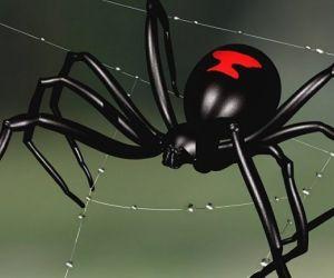 يتم تعيين عناكب الأرامل السوداء من خلال الساعة الرملية الحمراء التي توجد على الجانب السفلي من بطونهم، والأرامل السوداء هي سوداء اللون لامعة، وأجسام ...
