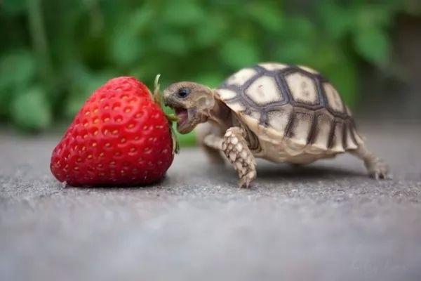 ماذا تأكل السلاحف الصغيرة ؟