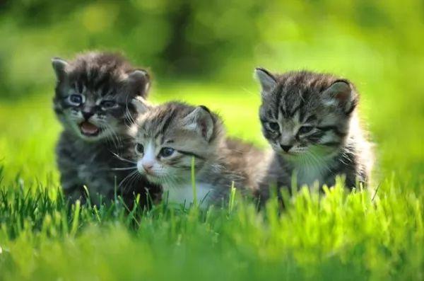 مراحل نمو القطط الصغيرة